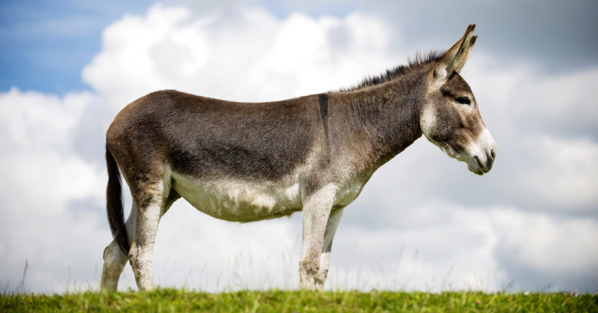 5 Donkeys That Are Going To Have Get A Lot Fatter If They Want Us To Eat Them