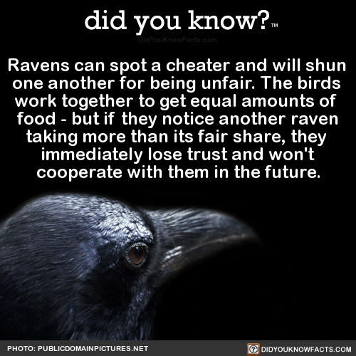 Ravens can spot a cheater and will shun one another for being…
